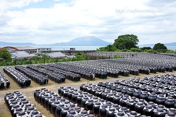 坂元のくろずの壺畑と桜島