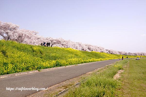 熊谷桜堤 撮影 2021.4